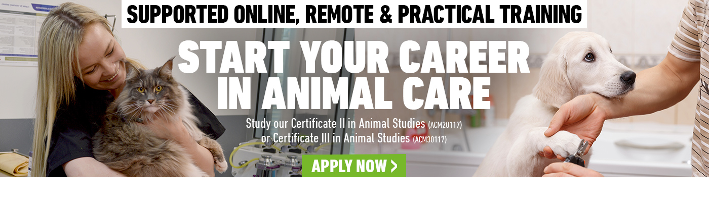 Animal Studies courses at Kangan Institute